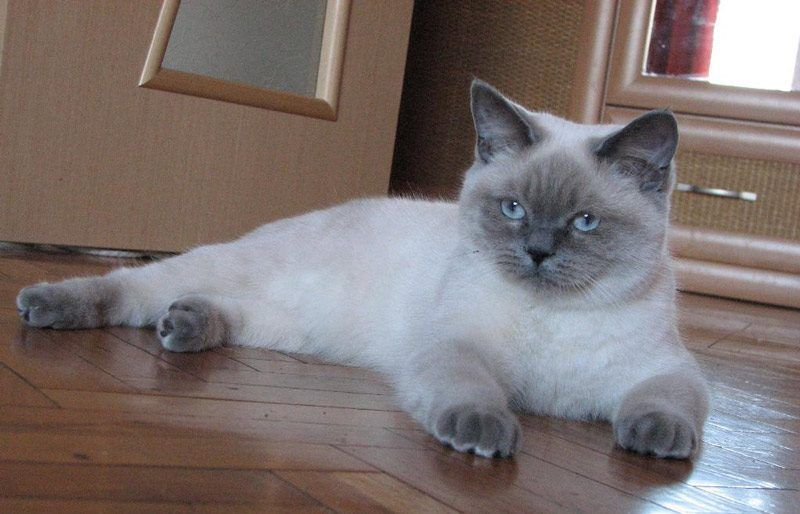 Котик лежит на полу