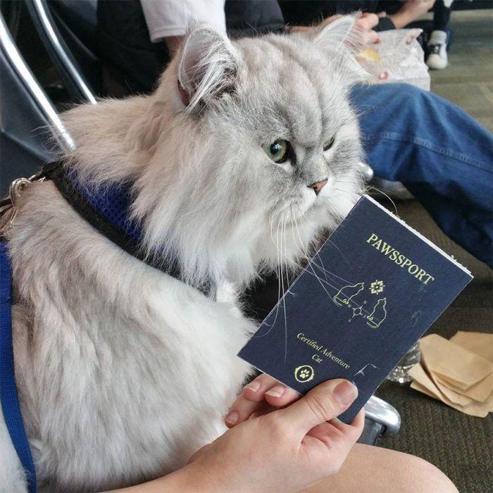 Гендальф путешественник