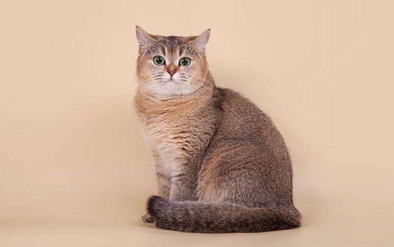 Очень спокойный кот