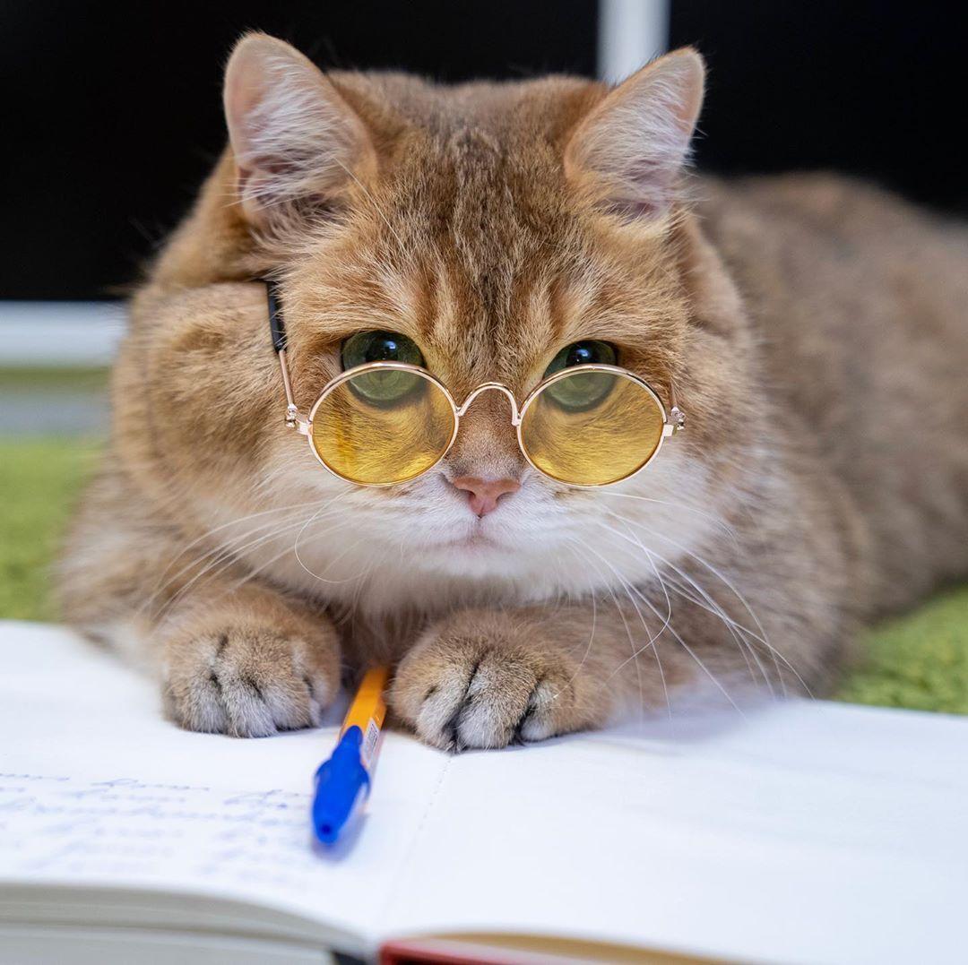 картинки умных кошек объяснения быть может