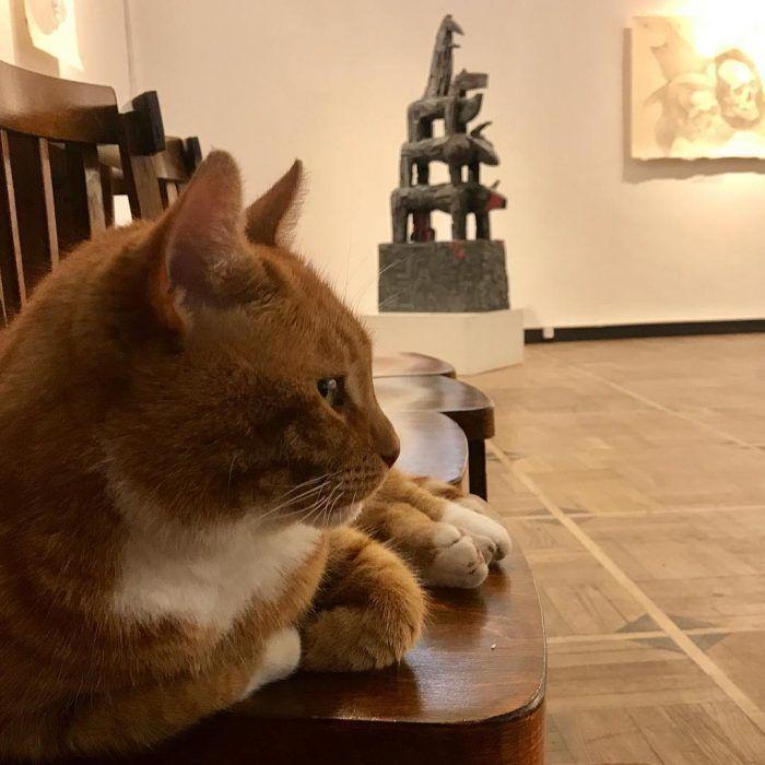 В зале музея