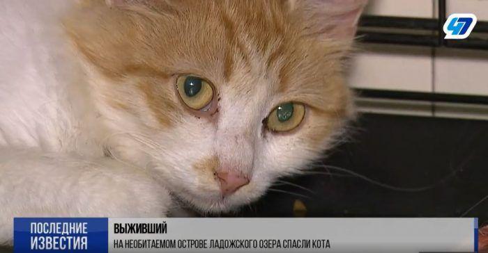 Кошка Пятница