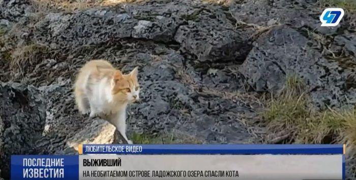 Кот на острове