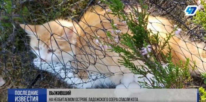 Кот Робин пойман