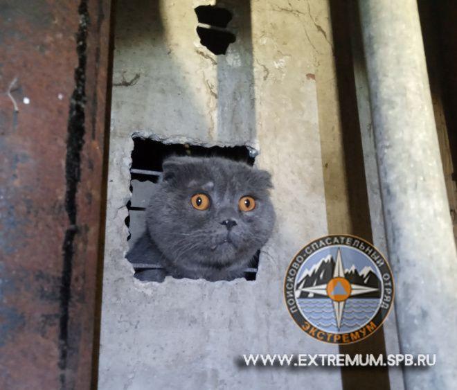 Вислоухий кот в вентиляции