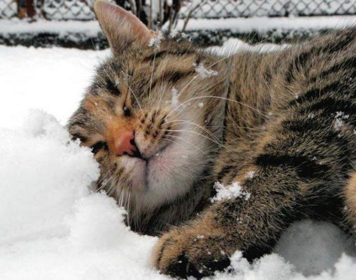 Котику нравиться снег