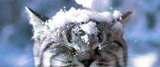 Котик и снег