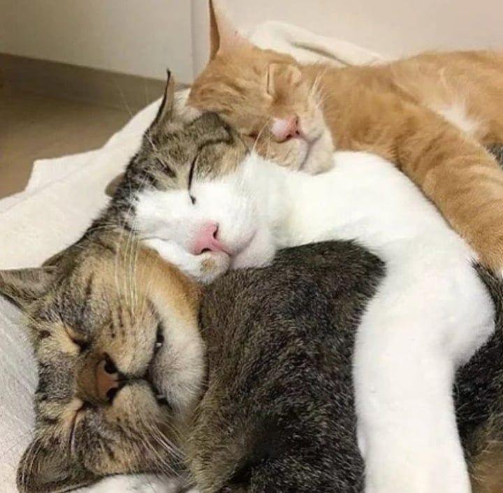 Фото с двумя котами обнимаются и спят