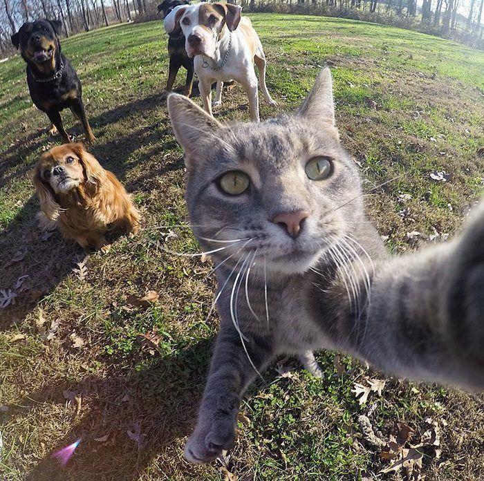 Селфи с собаками