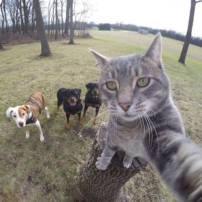 Котик фотографирует собак