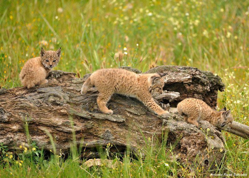 Котята играют в поле