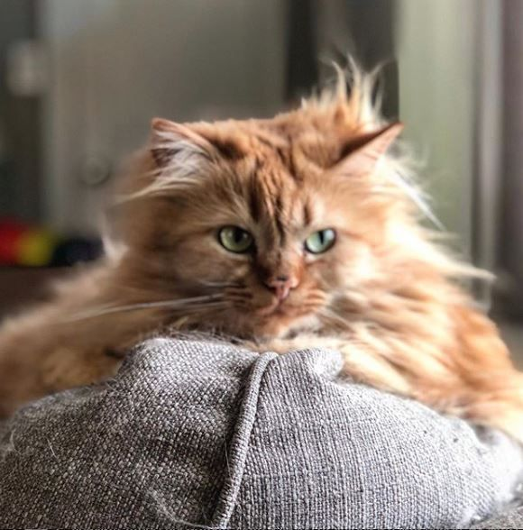 Кошечка выросла