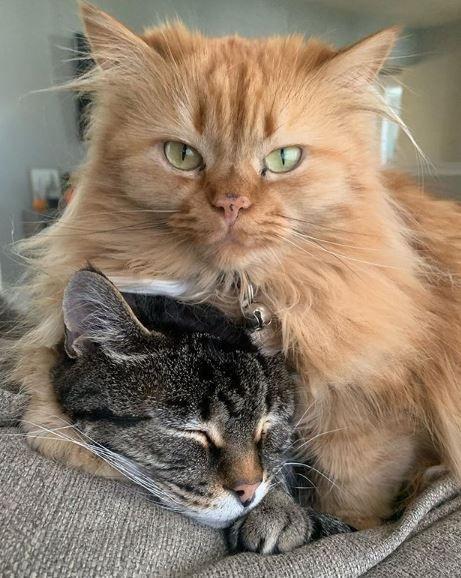 Два котика
