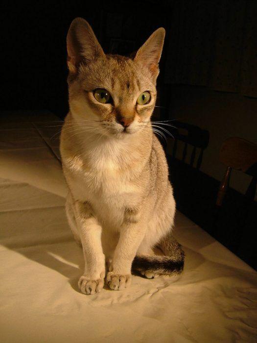 Кошка сидит на кровати