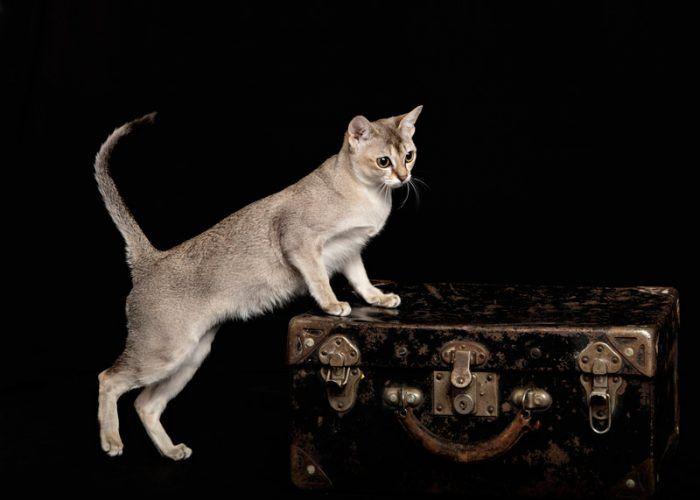 Кошка на чемоданчике