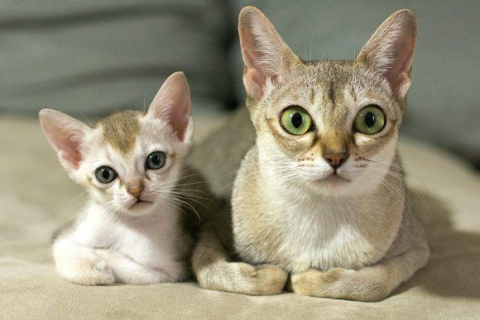 Котенок и его мама