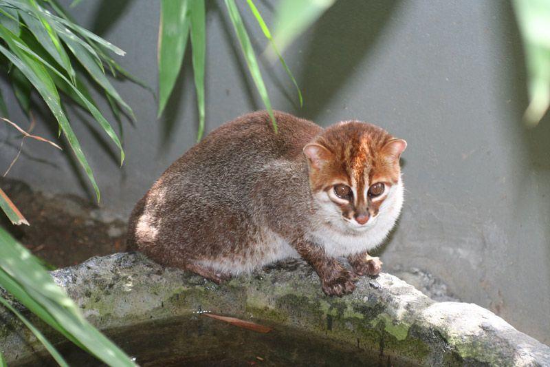Кошка на ветке