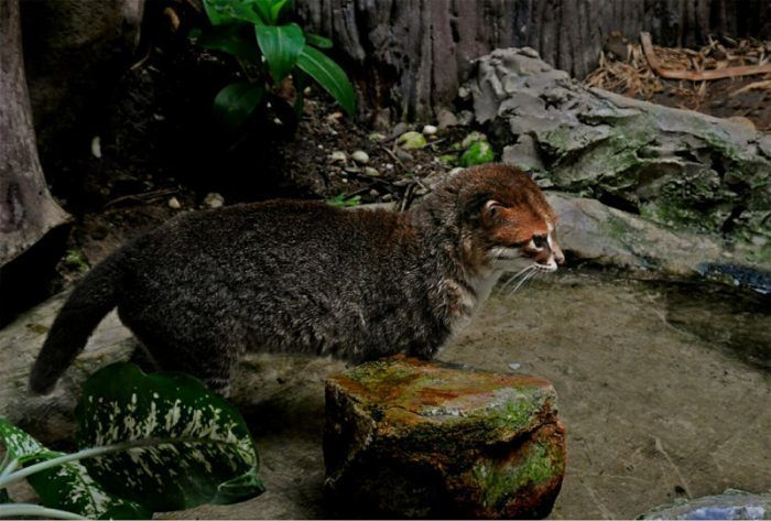 Кошка в зоопарке
