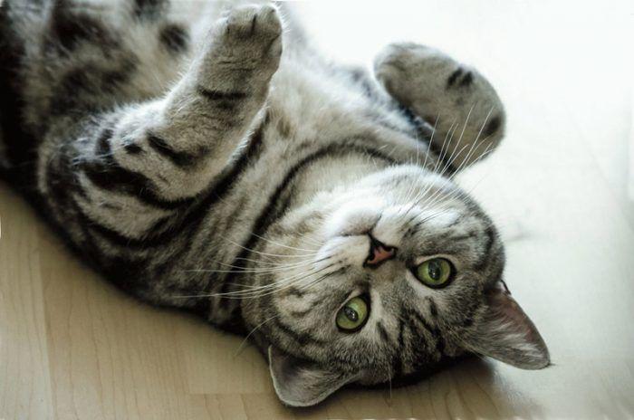 Котик валяется на полу