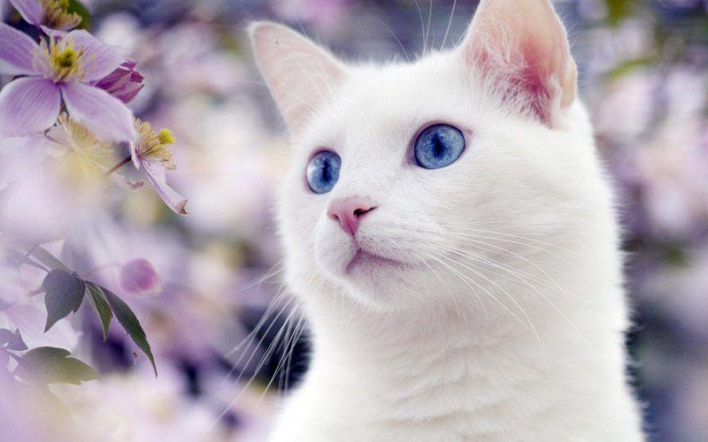 Белоснежная кошечка в цветах