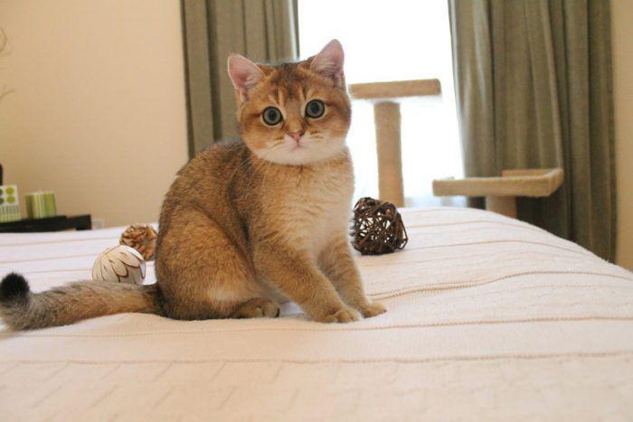 Котенок хочет поиграть с хозяином