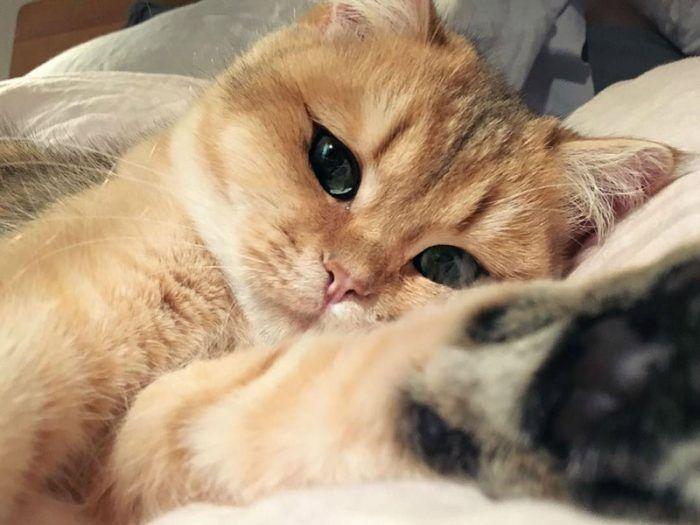 Кошечка довольна