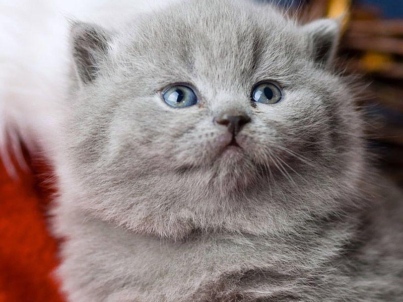 Пухленький котенок