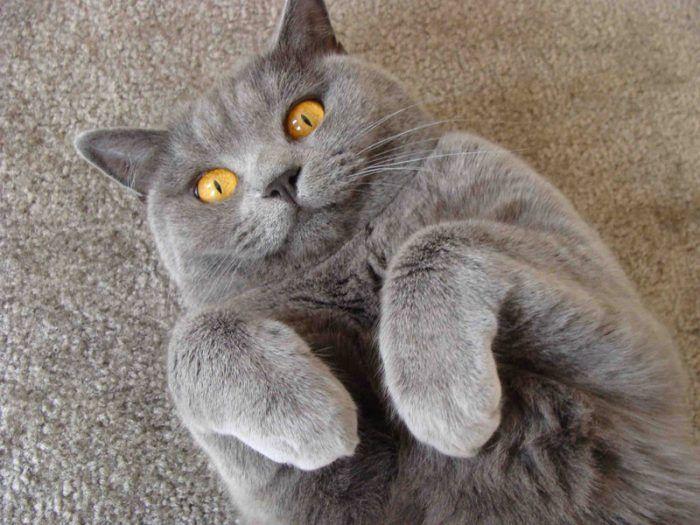 Очаровательный кот