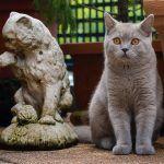 Кошка и статуэтка
