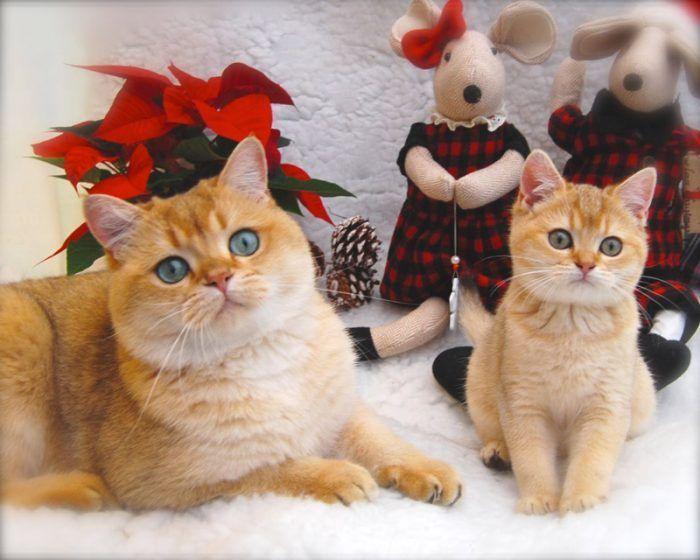 Кошки позируют