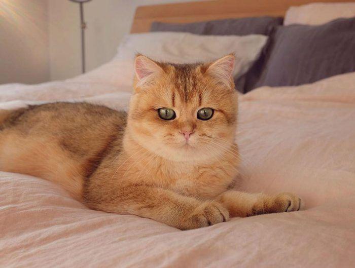 Бриташка на кроватке