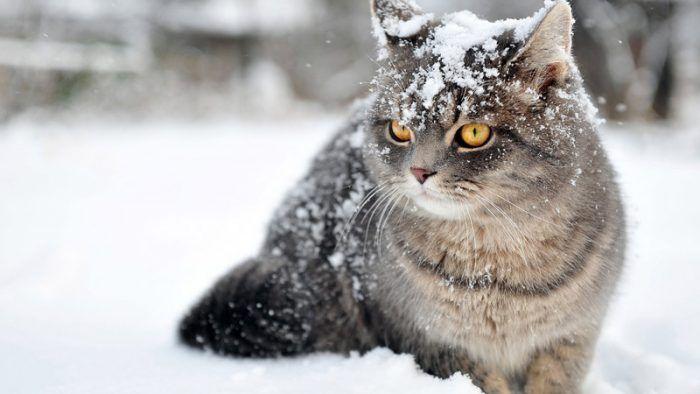 Британец в снегу