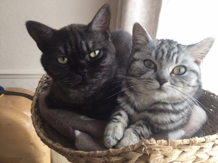 Разные коты в одной корзинке