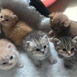 Котята разного цвета