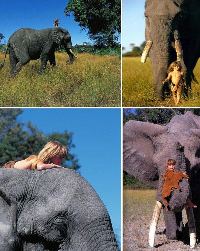 Слоны и Типпи