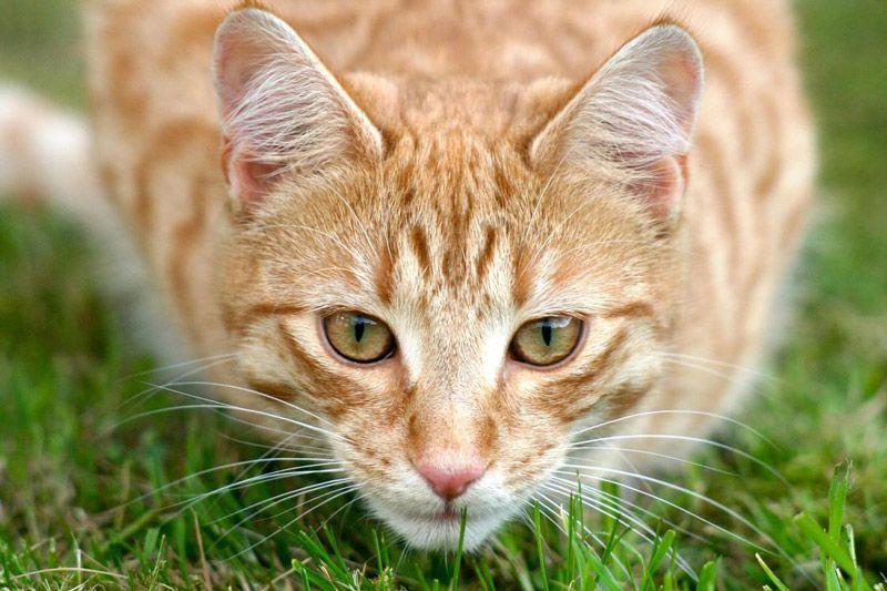 Кот наблюдает