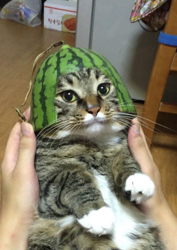 Котик в арбузе