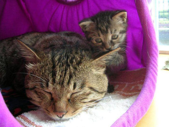 Кошка и котенок Ли Хуа