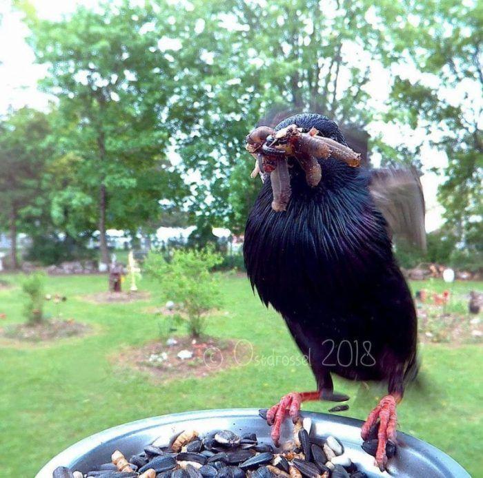 Голодная птичка