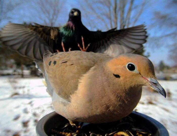 Большая птица и голубка