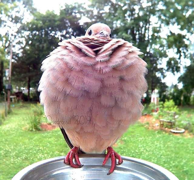 Розовая птичка