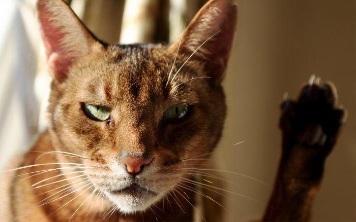 Недружелюбие котов