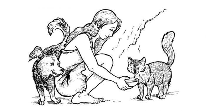 Одомашненная кошка