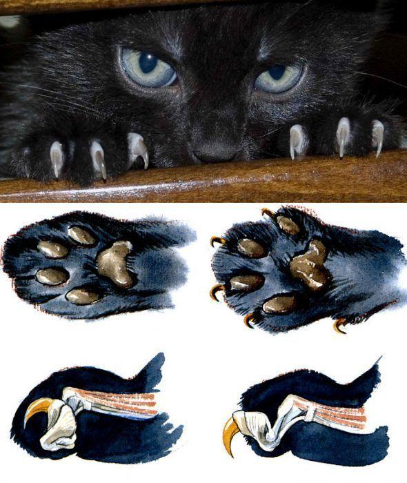 Когти котов