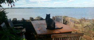 Кот у моря