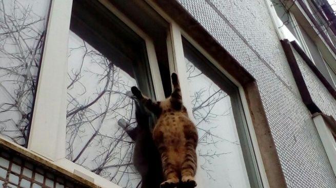 Кот застрявший в окне