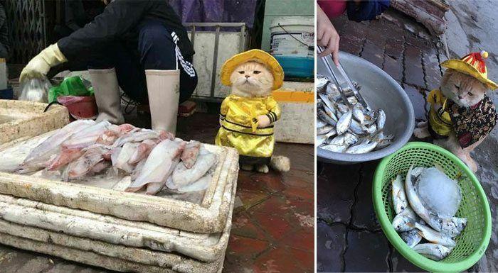 Рыбный продавец