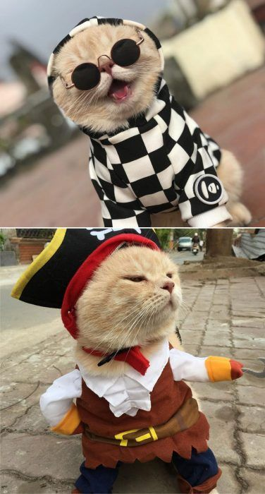 Пират и песик