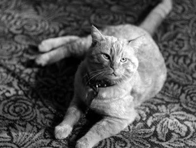 Один из котов