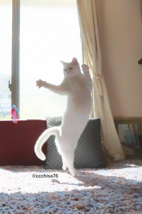 Кошечка танцует